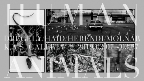 Human Animals - Drégely / Haid / Herendi / Molnár