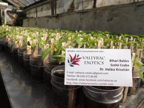 Különleges palánták és ehető növények vására