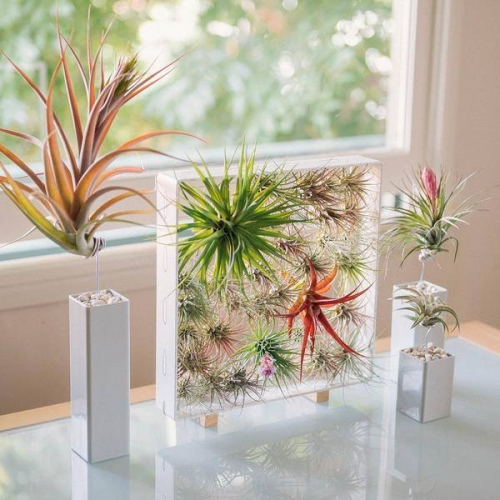 Air plant workshop